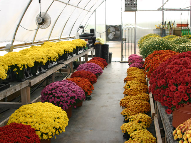 Wholesale & Retail Nursery