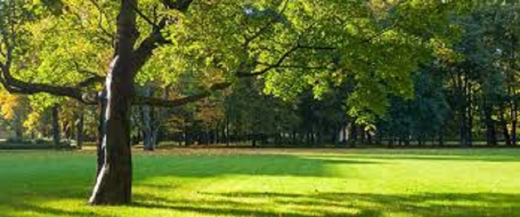 Well Established Tree and Lawn Care